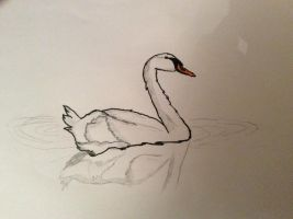 Swan drawing by alucardserasfangirl