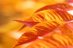 Couleur d Automne II by AExils