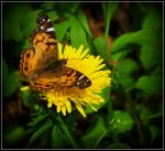 Painted Lady by Ryser915