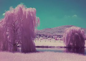 IR Painting 2 by Earthymoon