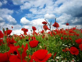 Field of Poppies - IV by MD-Arts