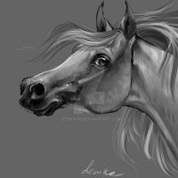horse portrait 2 by Lenika86