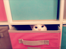 Kitty in Storage by OdieFarber