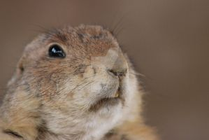 Baby PrairieDog 2 by PiperMagician