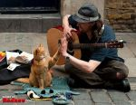 Homeless Red Cat - Bob by jaidaksghost