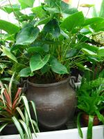 Potted Green Plants by wafreeSTOCK