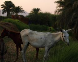 Nile Donkeys by Ironpaw