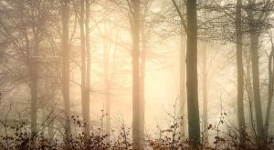 into the woods by vularia