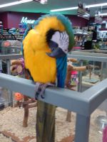 parrot by brittanyxm0