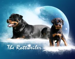 The rottweiler by skysari
