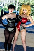 Catwoman and Harley Quinn 1 by Insane-Pencil