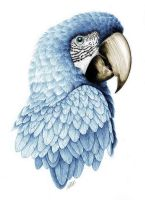 Macaw (After Shading) by whynosow