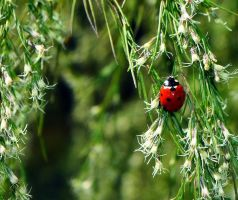 Lady Bug by TokalaPhotography