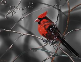 red cardinal painting by nosoart