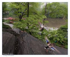 taking off - central park, NYC by Tomoji-ized
