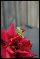 Baby Tree Frog by Alabamaphoto