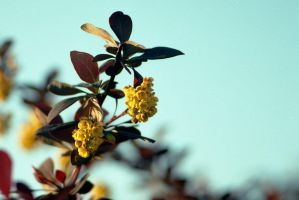 Yelow by Baltagalvis