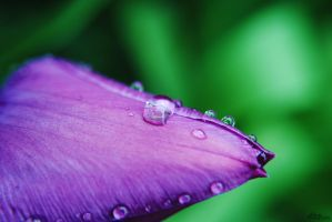 Purps by DhxFoto