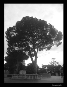 Vatican,Italy.staring at the tree. by nickell