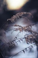 Winters Elegy by MCG0603