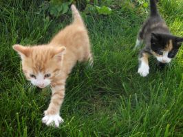 Walking kittens by Lena-Panthera