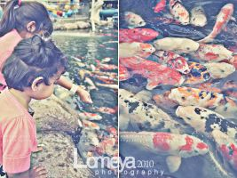 Fishes by Lomeya