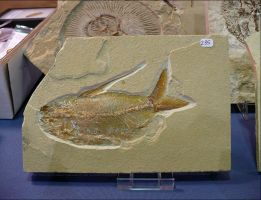 Fossilized Fish by Undistilled