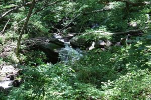 amicalola falls by xxtheSilent