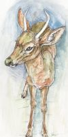 lost deer by isonade