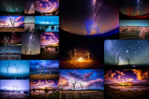 Four Seasons of Trees by Questavia