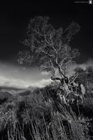 the monochrome tree by sultan-alghamdi