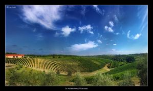 La Mormoraia Vineyard by Marcello-Paoli