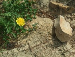 Flower and Stone by DeLeilasenpei