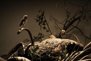 Owl Conversation by unusualPhoto