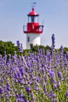 By top the lavender ! by Tetelle-passion