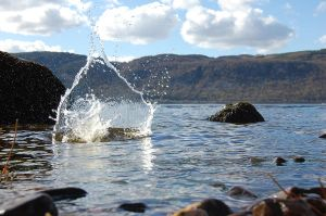 loch ness monster? by shaggly