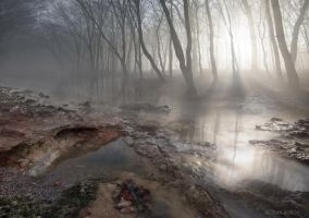 Morning Mist by borda
