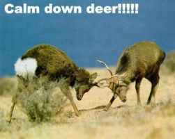 Calm Down Deer by well-pluck-my-goose