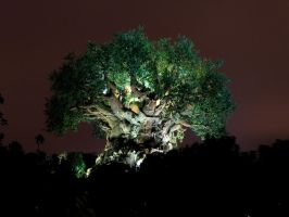 Animal Kingdom at Night 37 by AreteStock