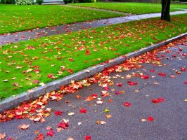 Bright Fall Leaves by AlethiometerGal