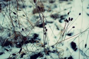 Plants hanging over the snow by Lullsstar