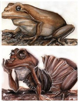 Frogtransformation explore frogtransformation on deviantart for Frog transformation