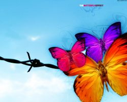 The Butterfly Effect by o-pie