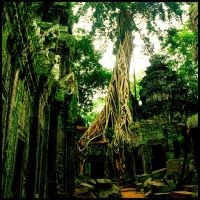 Twisted Roots Cambodia by thedecolab