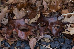 Oak Leaf Leather Masks by OsborneArts