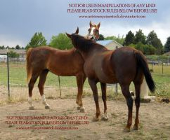 Grooming: Adina and Tucker by AstriexEquineStock