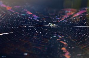 Spider in Rainbow Web by FallOut99
