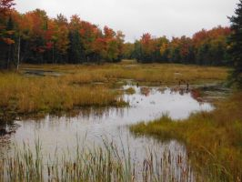 Autumn Swamp by Totaler
