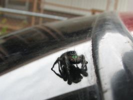 Joe the car spider by MissNight