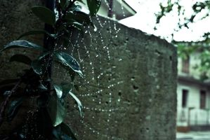 spider_web by Tonxs